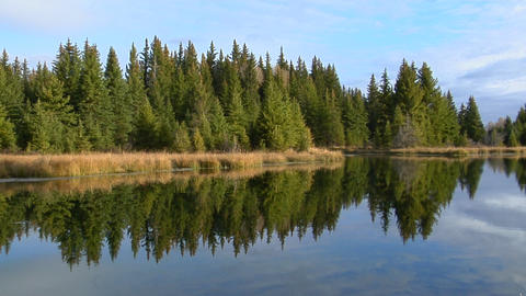 A forest of green pines are reflected in a mountain lake Footage