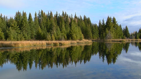 A forest of green pines are reflected in a mountain lake Stock Video Footage