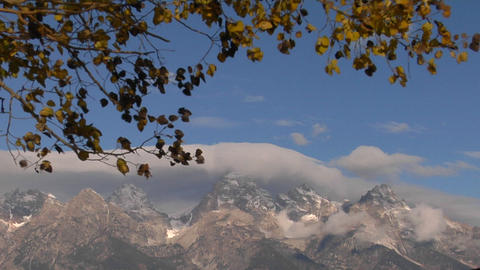Autumn leaves rustle in the breeze with cloud capped... Stock Video Footage