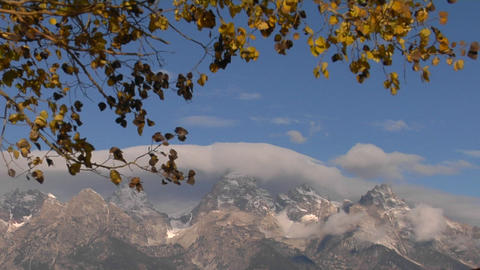 Autumn leaves rustle in the breeze with cloud capped Grand Tetons set against a blue sky Footage