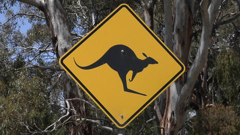 A kangaroo cross road sign stand near trees Footage
