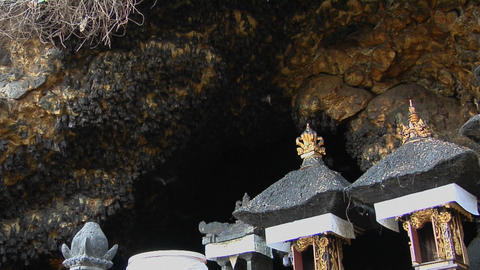 Bats fly in and out of a large cave in Bali, Indonesia Footage