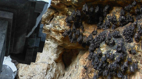 Bats fly in and out of a temple cave in Bali, Indonesia Stock Video Footage