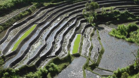 People work in a terraced rice field Stock Video Footage