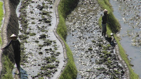 Farmers work in terraced rice field Stock Video Footage