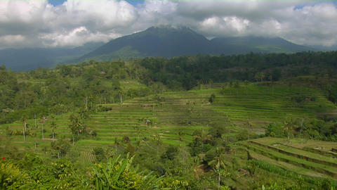 A terraced rice farm grows green fields Stock Video Footage