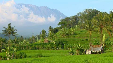 A terraced rice farm grows green fields Stock Video Footage