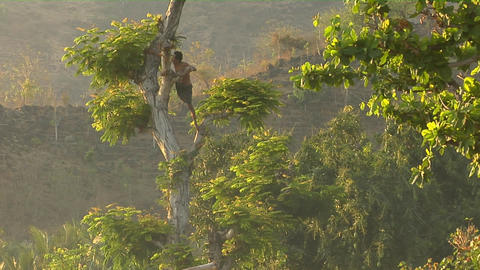 A man with a machete climbs a tree to cut branches Stock Video Footage
