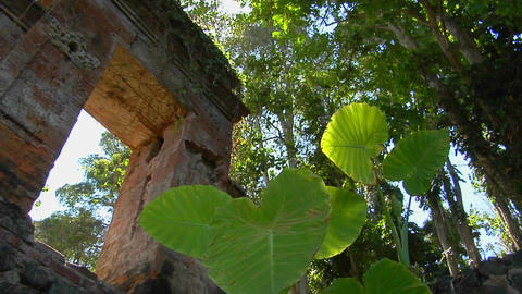 The tropical plants and ruins in Indonesia Stock Video Footage