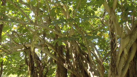 A low angle panning shot of a mangrove forest Stock Video Footage