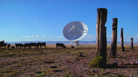 A satellite dish sits in a field with cattle and old... Stock Video Footage