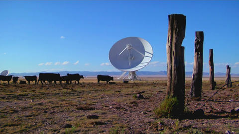 A satellite dish sits in a field with cattle and old fence posts Footage