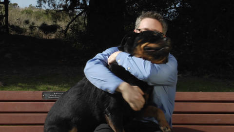 A dog jumps up onto the park bench so a man can pet him... Stock Video Footage