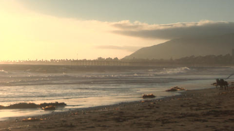 A man walks with his two dogs along a sandy beach Stock Video Footage