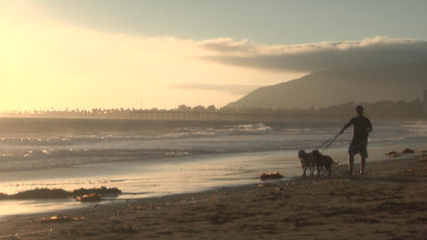 A man walks with his two dogs along a sandy beach Footage