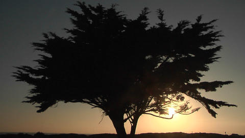 A tree is silhouetted at golden hour Stock Video Footage