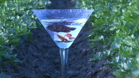 Fish swim in a martini glass Stock Video Footage