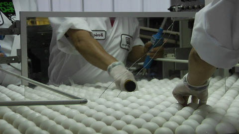 A worker sorts eggs in a factory Stock Video Footage
