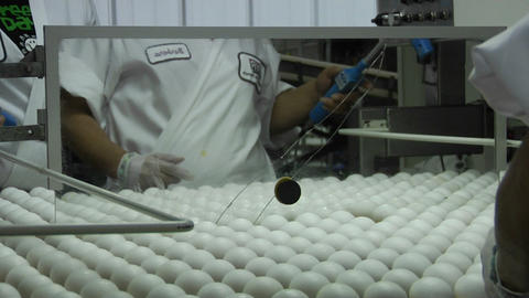 A worker sorts eggs in a factory Footage