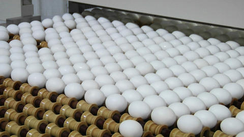Eggs move along a conveyor belt Stock Video Footage