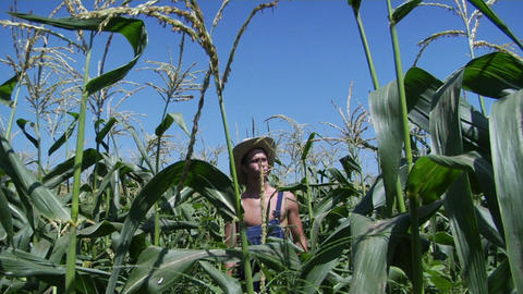 A man wearing overalls and a straw hat stands in a corn field Footage