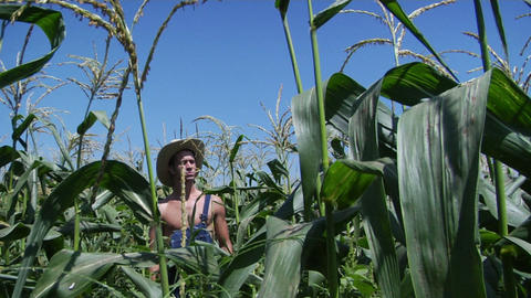 A man wearing overalls and a straw hat stands in a corn... Stock Video Footage