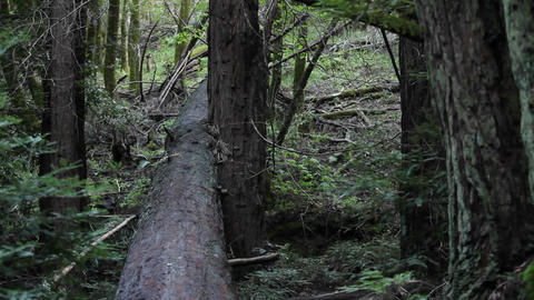 A man runs along a log in the woods, jumps off and rolls... Stock Video Footage