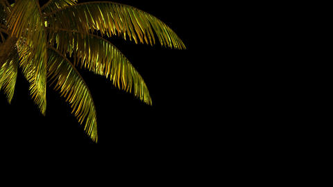 The branch of palm, palm tree in the wind. With alpha channel. File format - mov Animation