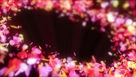 Spin of colorful petals,Particle CG Animation,Black Background,Loop Animation