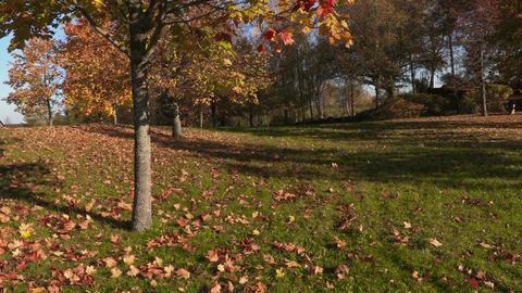 Beautiful autumn view Footage