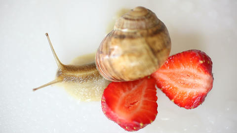 snail creeping among the strawberries on a white Footage