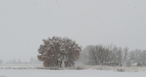 Winter blizzard snow storm rural farm tree DCI 4K 886 Footage
