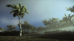 Palm trees blowing in the wind, morning mist Footage