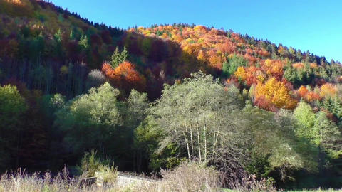 Autumn colors. Mountain forest in morning light Footage