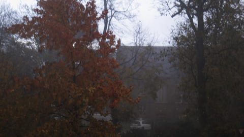 Leafless trees and autumn-colored trees moving with the wind in the street Live Action