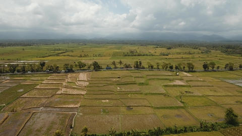 Rice terraces on Bali Live Action