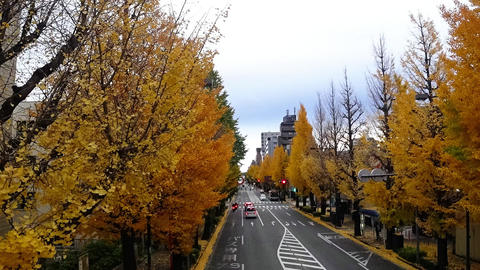 Gingko trees and national roads. Timelapse shooting Footage