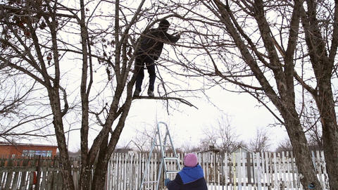 Man saws off the apple tree branch Footage