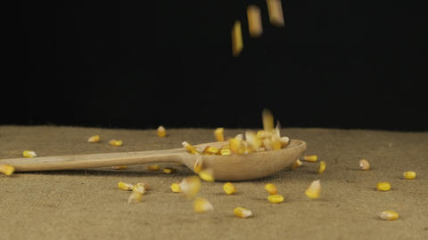 Grain corn starts falling into the wooden spoon and fills it. Slow motion Live Action