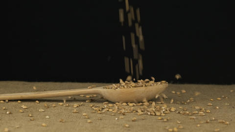 Grain wheat starts falling into the wooden spoon and fills it. Slow motion Live Action