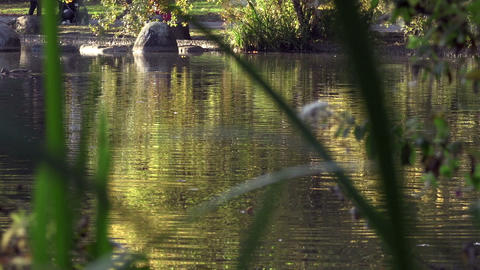 Ducks on the lake. Autumn time Footage