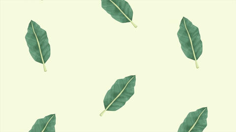 Tropical exotics leafs ecology animation pattern background 4k 9 Live Action
