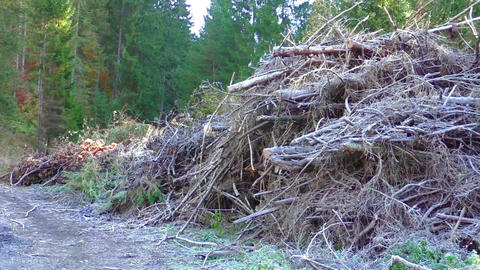 Pile of tree branch, wood stick and gabage Footage