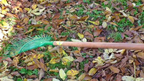 Woman gardener cleans the garden with a rake autumn Live Action