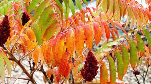 Autumn nature colors Footage