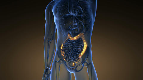 Science Anatomy Scan Of Human Colon Glowing With Yellow Live Action