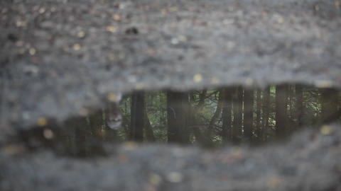 A woman jogs across a puddle reflecting the image of dozens of tress Footage