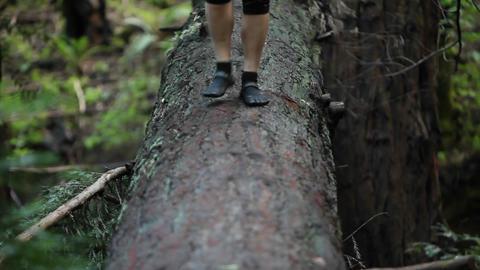 A woman walks across a fallen log in a forest Stock Video Footage