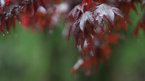 Rain falls upon autumn leaves Stock Video Footage