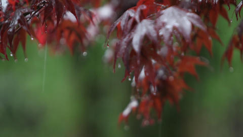 Rain falls upon autumn leaves Footage